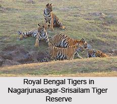 Nagarjunasagar-Srisailam Tiger Reserve