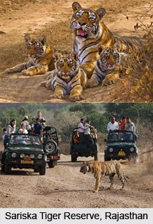Sariska Tiger Reserve, Rajasthan