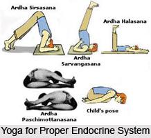 Impact of Yoga Asanas on Endocrine Glands