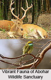 Abohar Wildlife Sanctuary, Fazilka District, Punjab