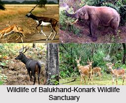 Balukhand-Konark Wildlife Sanctuary, Odisha