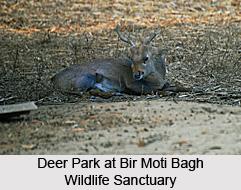 Bir Moti Bagh Wildlife Sanctuary, Patiala District, Punjab