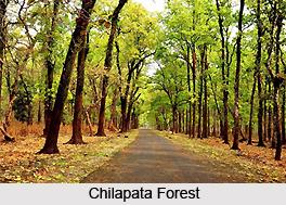 Chilapata Forest, Jalpaiguri District, West Bengal