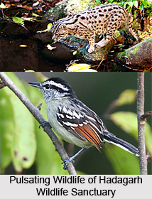Hadagarh Wildlife Sanctuary, Odisha