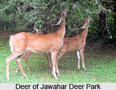 Jawahar Deer Park, Ranga Reddy District, Telangana