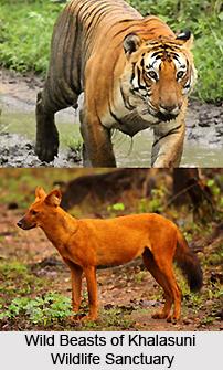 Khalasuni Wildlife Sanctuary, Sambalpur District, Odisha
