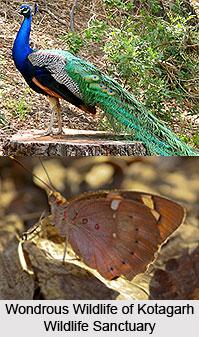 Kotagarh Wildlife Sanctuary, Kandhamal District, Odisha