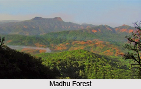 Madhu Forest, Ancient Indian Forest