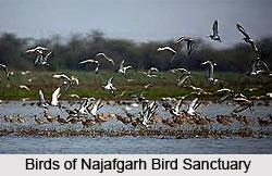Najafgarh Bird Sanctuary, South West Delhi