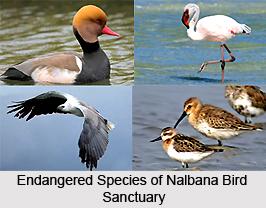 Nalbana Bird Sanctuary, Odisha