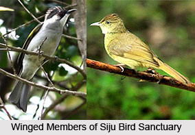 Siju Bird Sanctuary, South Garo Hills District, Meghalaya