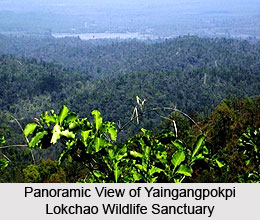 Yaingangpokpi Lokchao Wildlife Sanctuary, Chandel District, Manipur