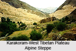 Karakoram-West Tibetan Plateau Alpine Steppe Forest