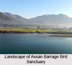 Assan Barrage Bird Sanctuary, Uttarakhand