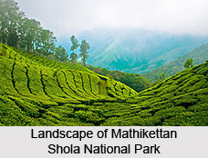 Mathikettan Shola National Park, Idukki District, Kerala