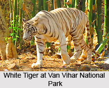 Van Vihar National Park, Bhopal, Madhya Pradesh