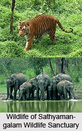 Sathyamangalam Wildlife Sanctuary, Erode District, Tamil Nadu