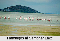 Sambhar Lake Wildlife Sanctuary, Rajasthan