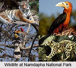 Namdapha National Park, Changlang District, Arunachal Pradesh