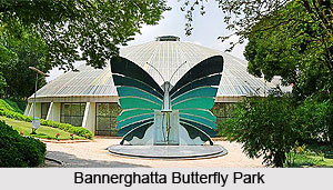 Bannerghatta Butterfly Park, Bengaluru, Karnataka