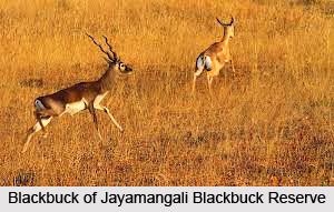 Jayamangali Blackbuck Reserve, Tumkur District, Karnataka