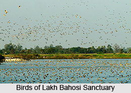 Lakh Bahosi Sanctuary, Kannauj District, Uttar Pradesh