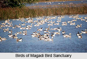 Magadi Bird Sanctuary, Gadag District, Karnataka