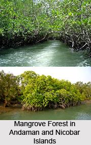 Mangroves of Andaman and Nicobar Islands