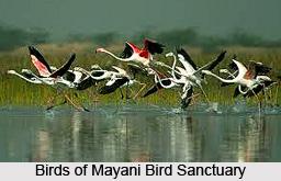 Mayani Bird Sanctuary, Vaduj, Maharashtra