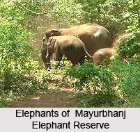 Mayurbhanj Elephant Reserve, Keonjhar district, Odisha