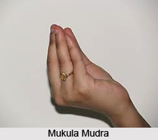 Mukula Mudra, Yoga