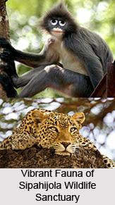 Sipahijola Wildlife Sanctuary, Tripura