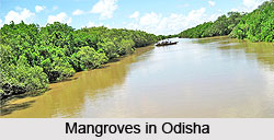 Mangroves in Odisha