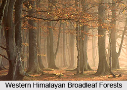 Western Himalayan Broadleaf Forests