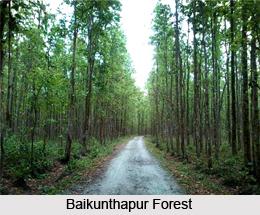 Baikunthapur, Dooars, West Bengal