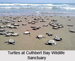 Cuthbert Bay Wildlife Sanctuary, Middle Andamans, Andaman and Nicobar Islands