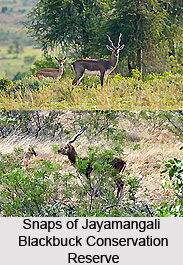 Flora and Fauna of Jayamangali Blackbuck Conservation Reserve