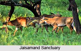 Jaisamand Sanctuary, Udaipur District, Rajasthan