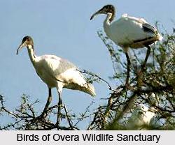 Overa Wildlife Sanctuary, Pahalgram District, Jammu and Kashmir