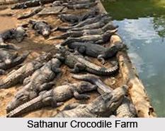 Sathanur Crocodile Farm