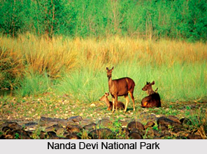 Nanda Devi Sanctuary, Garhwal Himalayas