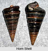 Horn Shell, Indian Aquatic Species