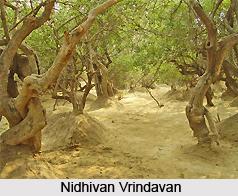 Nidhivan Vrindavan, Mathura, Uttar Pradesh