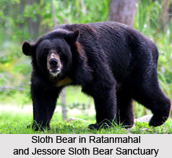 Ratanmahal and Jessore Sloth Bear Sanctuary