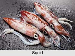 Squids, Aquatic Animal