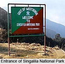 Singalila National Park, Darjeeling District, West Bengal