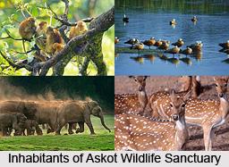 Askot Wildlife Sanctuary, Uttarakhand