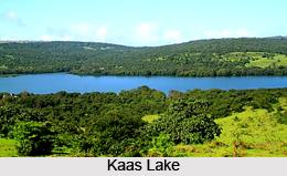 Kaas Plateau, Western Ghats, Maharashtra