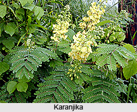 Karanjika Pant, Indian Medicinal Plants