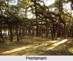 Peerlamarri, Telangana